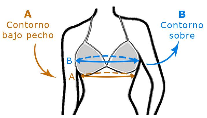 Contornos calculo talla sujetador